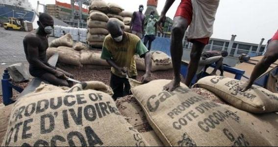 cacao prix
