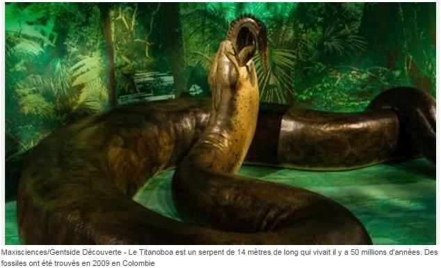 le plus gros serpent