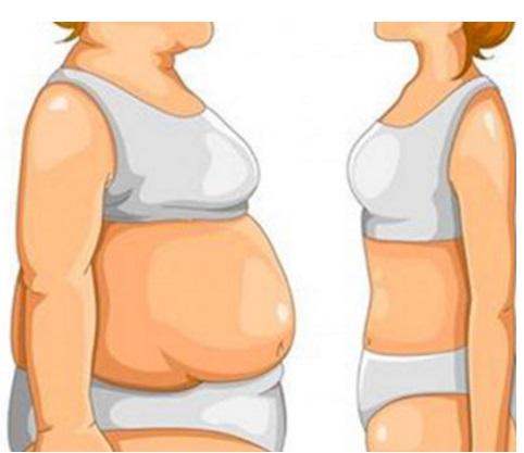 Les exemples du menu à la combustion de la graisse