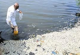 """Résultat de recherche d'images pour """"Mortalité des poissons, le CIAPOL fait des suggestions ; les populations de Bocanda reçoivent des infrastructures"""""""