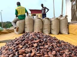 Le Ghana menacé de perdre son rang de numéro deux mondial du cacao -  Chronique des matières premières